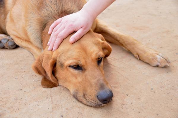 Que sont les chondroprotecteurs pour chiens?