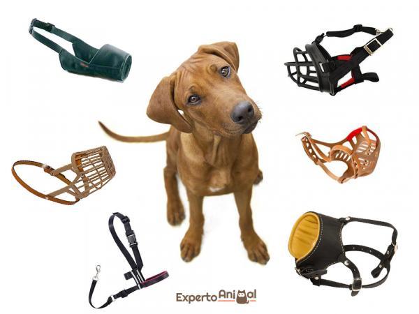 Quelle est la meilleure muselière pour chiens?