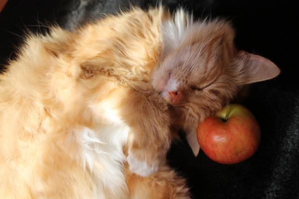 RECOURS À LA MAISON pour la gingivite chez les chats