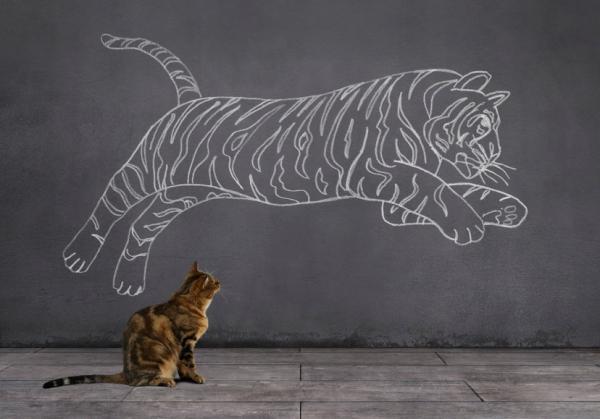 Races de chats qui ressemblent à des tigres
