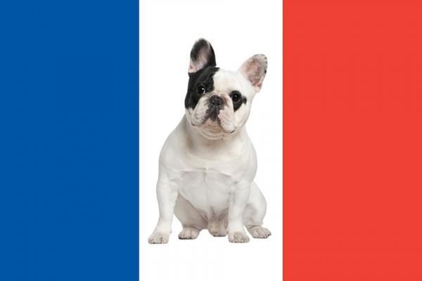 Races de chiens français - Liste avec photos et caractéristiques