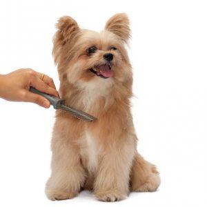 Recommandations pour brosser les poils de mon chien