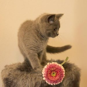Remèdes à la maison pour les acariens chez les chats