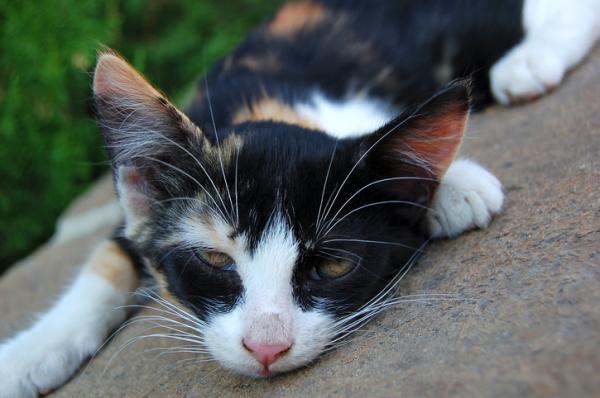 Remèdes maison pour chats déshydratés