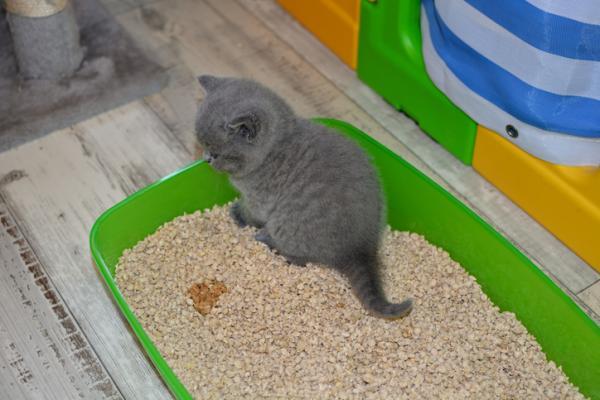 Remèdes maison pour un chat qui urine du sang