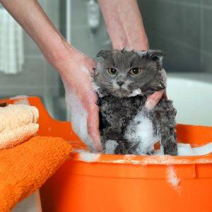 Shampooing aux puces pour chat fait maison