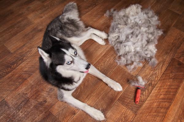 Siberian Husky Hair Care