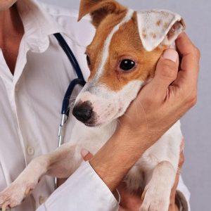 Tests d'allergie au chien