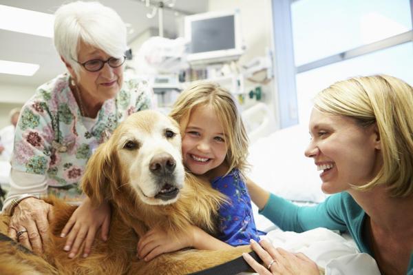Thérapies canines pour enfants autistes