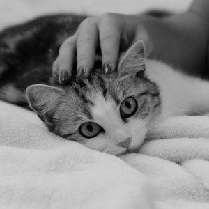 Tranquillisants naturels pour chats