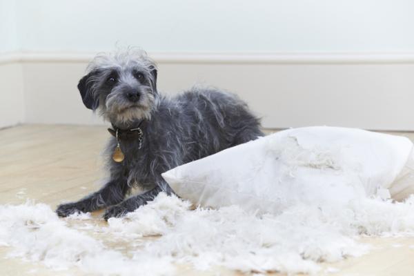 Tranquillisants pour chiens - Recommandations selon chaque cas