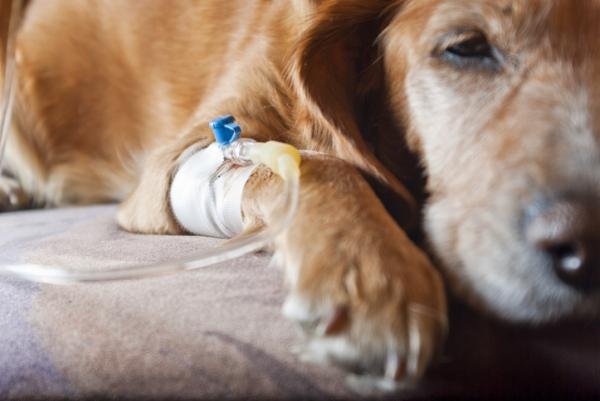 Tumeurs chez les chiens - types, symptômes et traitement