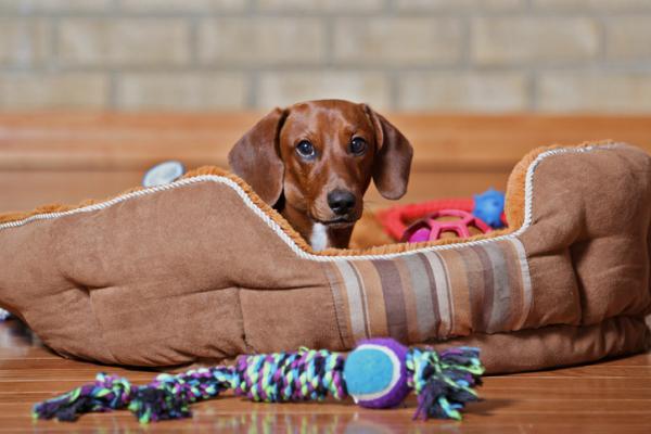 Types de jouets pour chiens
