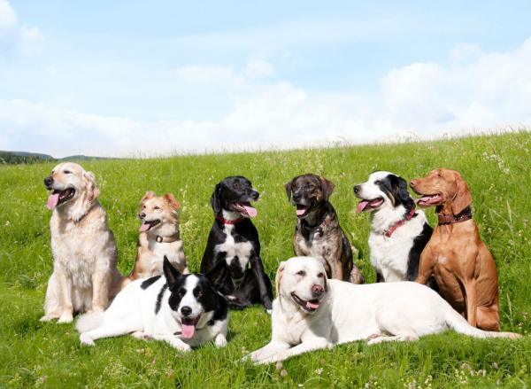 Types de poils sur le chien et comment prendre soin de chacun d'eux