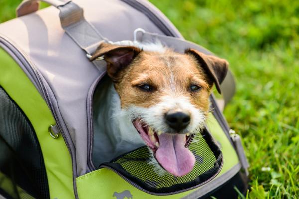Types de porte-chiens et comment choisir le bon