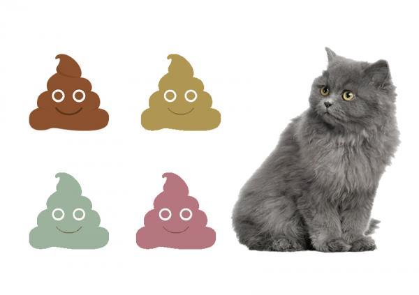 Types d'excréments chez les chats et leur signification