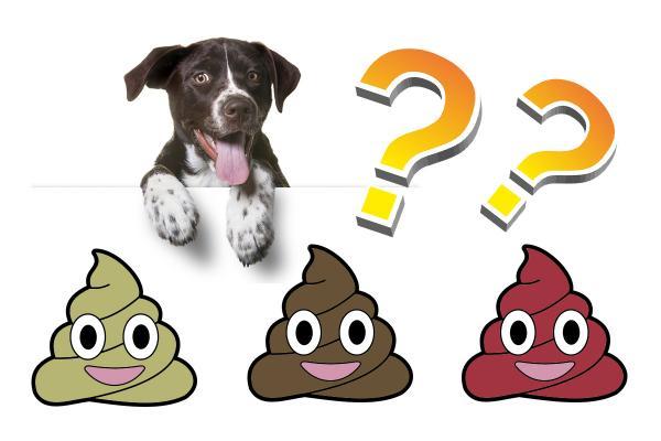 Types d'excréments chez les chiens et leur signification