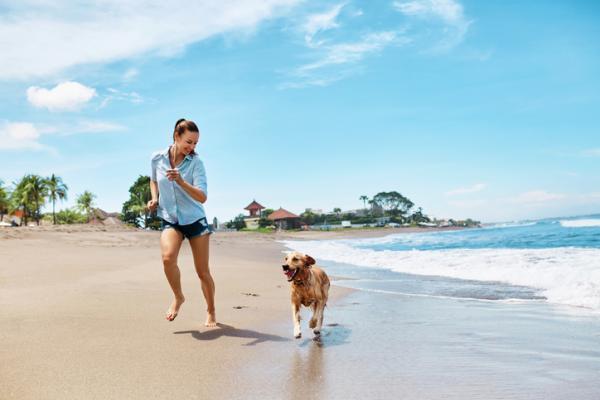 Vacances pour chiens - 12 destinations pour chiens à connaître!