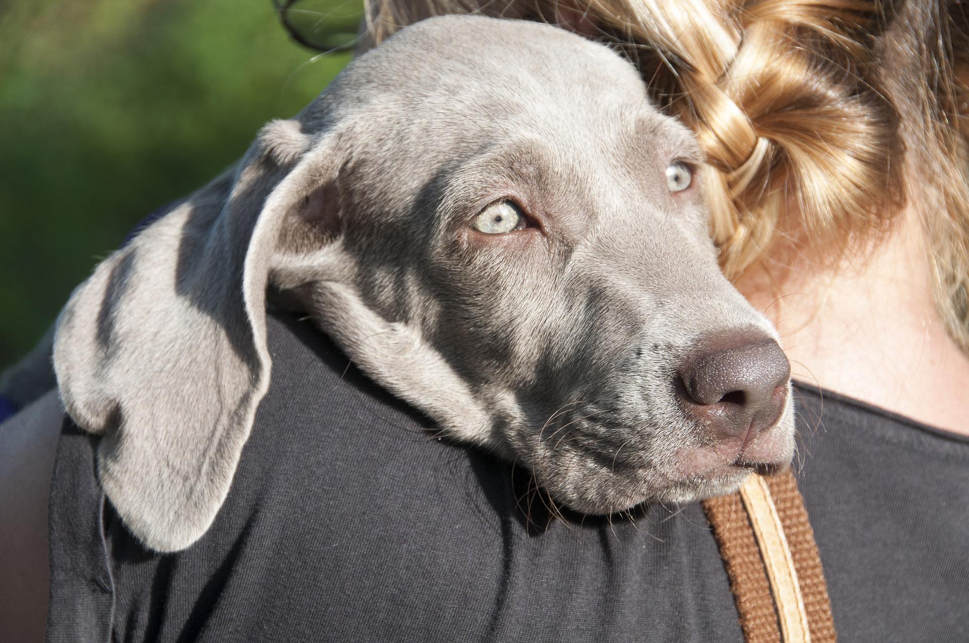 Comment caresser un chien ? Conseil