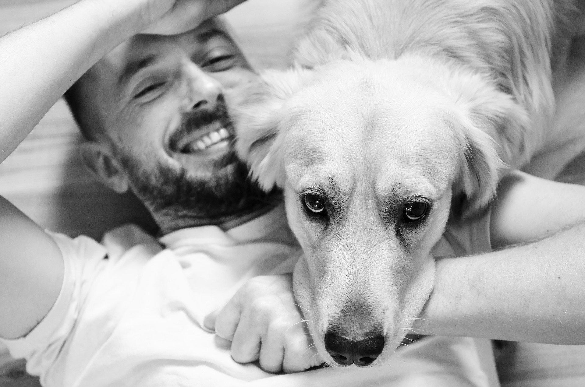 Comment savoir si votre chien vous aime - les 7 preuves