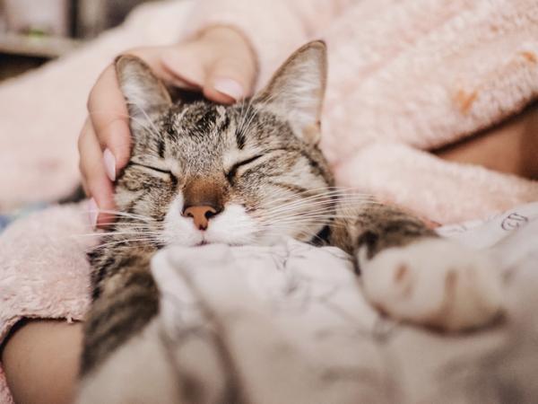 Comment détendre un chat?