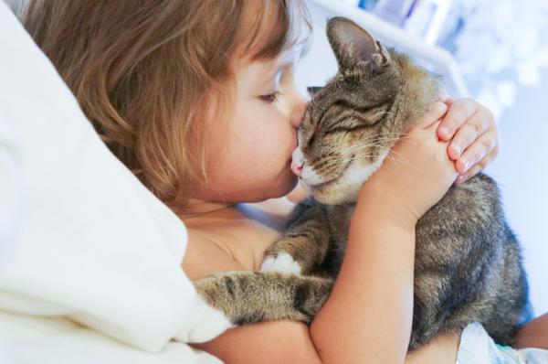 Les chats AIMENT leurs propriétaires?