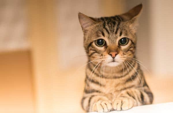 15 choses que vous ne devriez pas faire à votre chat