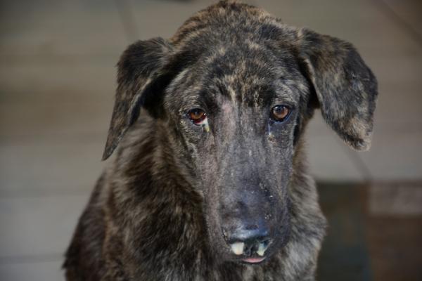 AMBROXOL pour chiens - Posologie, utilisations et effets secondaires