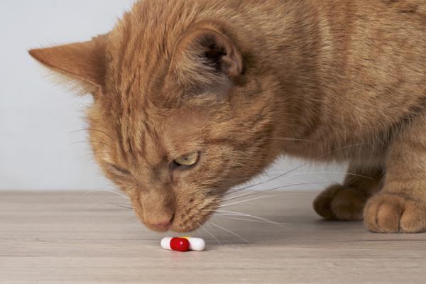MILPRO for CATS - Dosage, utilisations et effets secondaires