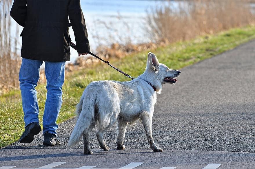 Comment bien tenir son chien en laisse sans lui faire mal ?