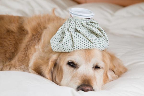 Grippe chez les chiens - Symptômes et traitement