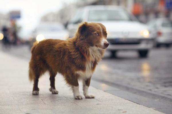 Que dois-je faire si je trouve un chien abandonné?