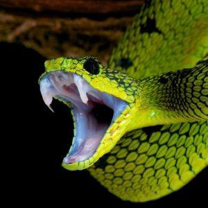 Que faire si un serpent mord mon chien?