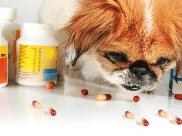 VITAMINE K pour CHIENS - Dosage et utilisations
