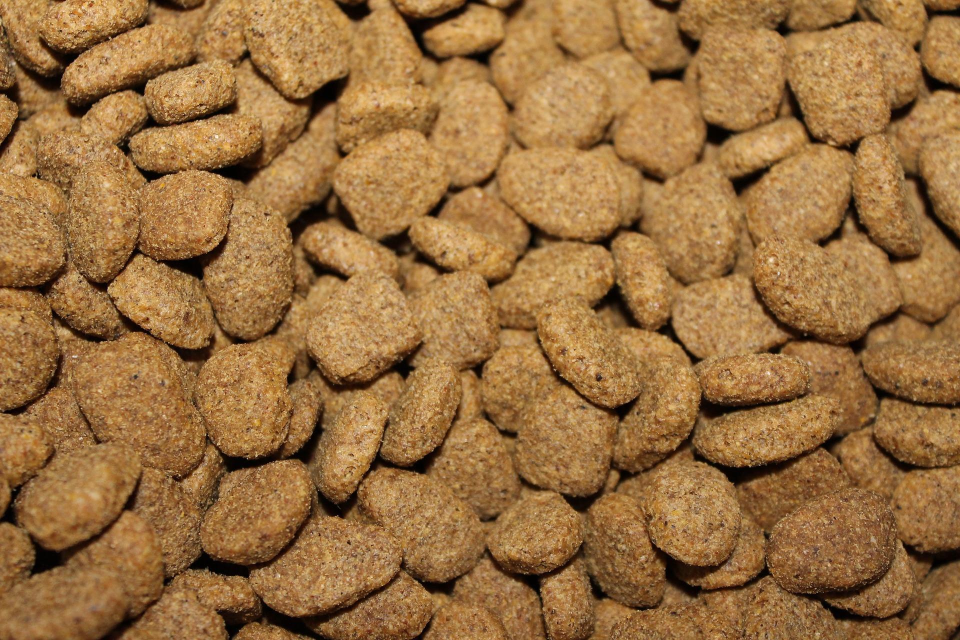Quelles sont les meilleures croquettes sans céréales pour chien ?