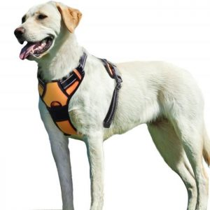 🏆 Meilleur HARNAIS pour chien : quel modèle choisir ? Comparatif / achat