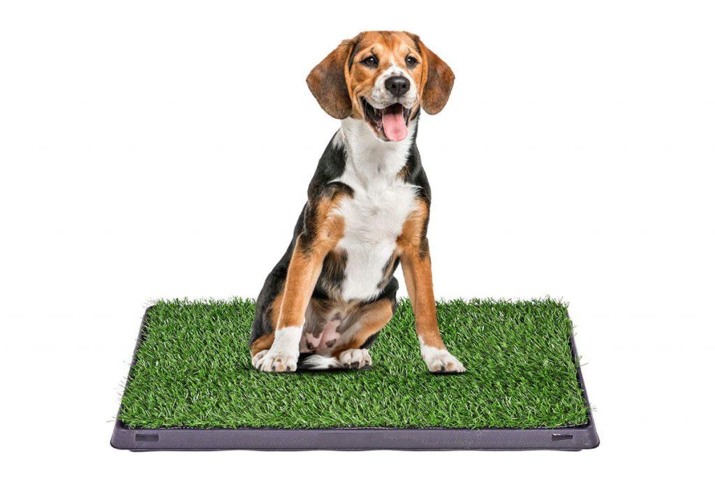 🥇 Les meilleures toilettes pour chiens !