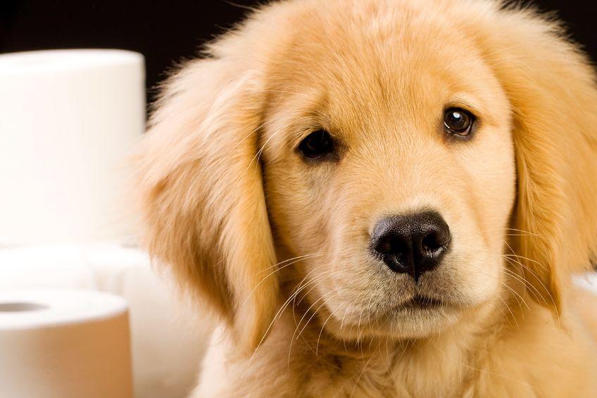 Pourquoi est-il important de vermifuger son chien aujourd'hui?