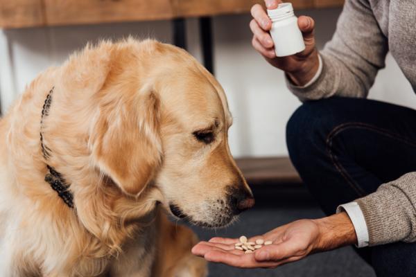 VITAMINE B pour CHIENS - Dosage, avantages et utilisations