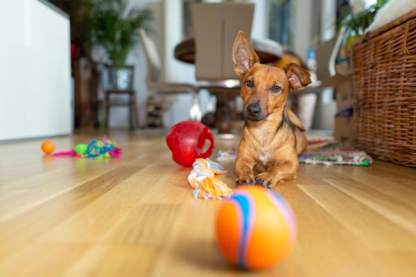 Les 6 meilleurs jouets pour chiens