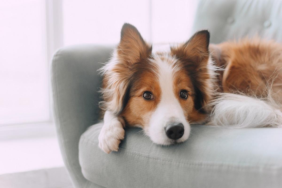 Nos conseils pour répondre aux besoins de votre chien