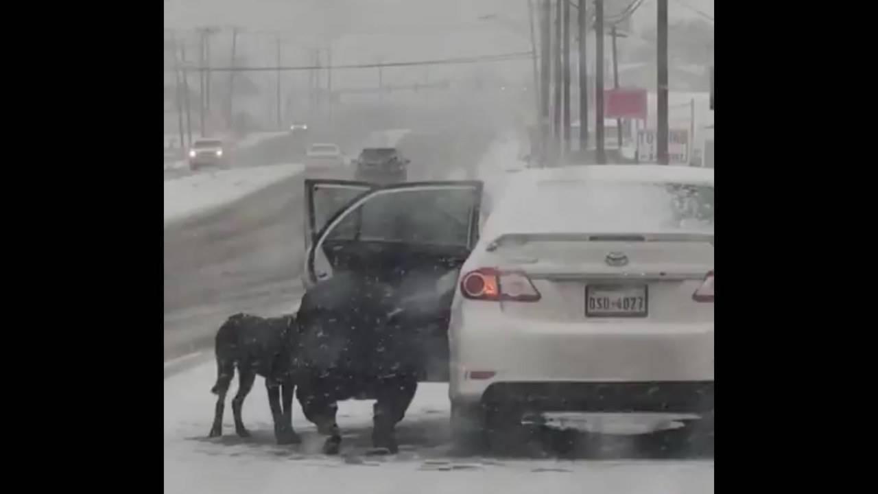 Arrêtez la voiture pour sauver un chien errant d'une tempête de neige - VIDEO