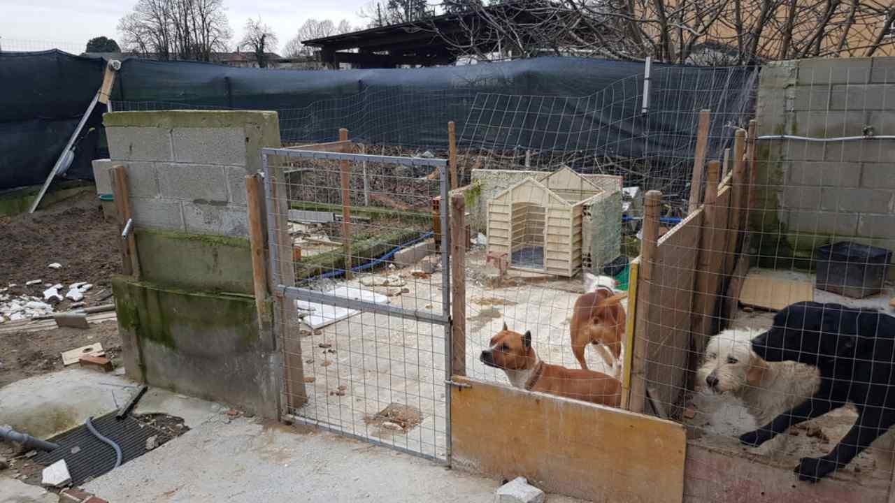 Maison des horreurs dans la région milanaise: chiens et lapins en décomposition totale
