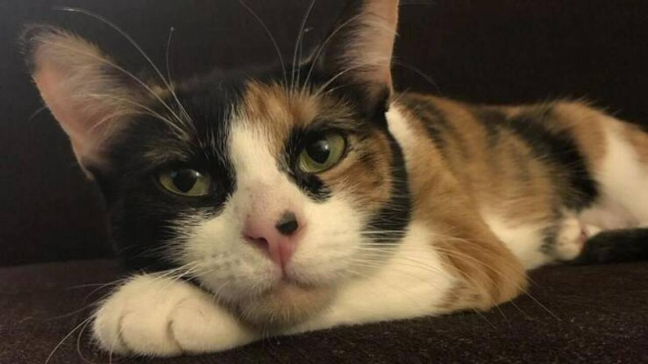 Cat découvre une fuite de gaz et sauve toute la famille (VIDEO)