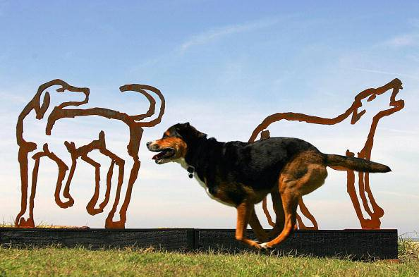 Choses à savoir pour faire du jogging avec votre chien