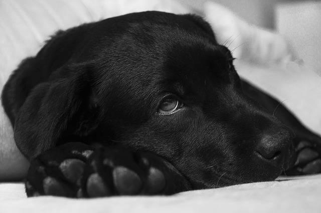 Comment intervenir en cas d'empoisonnement de votre chien