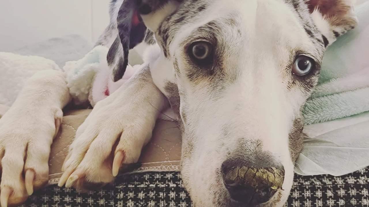 La liste de souhaits d'un chien en phase terminale: l'histoire de Kron