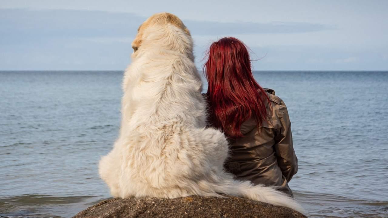 L'amour rend les chiens spéciaux: les études scientifiques le disent