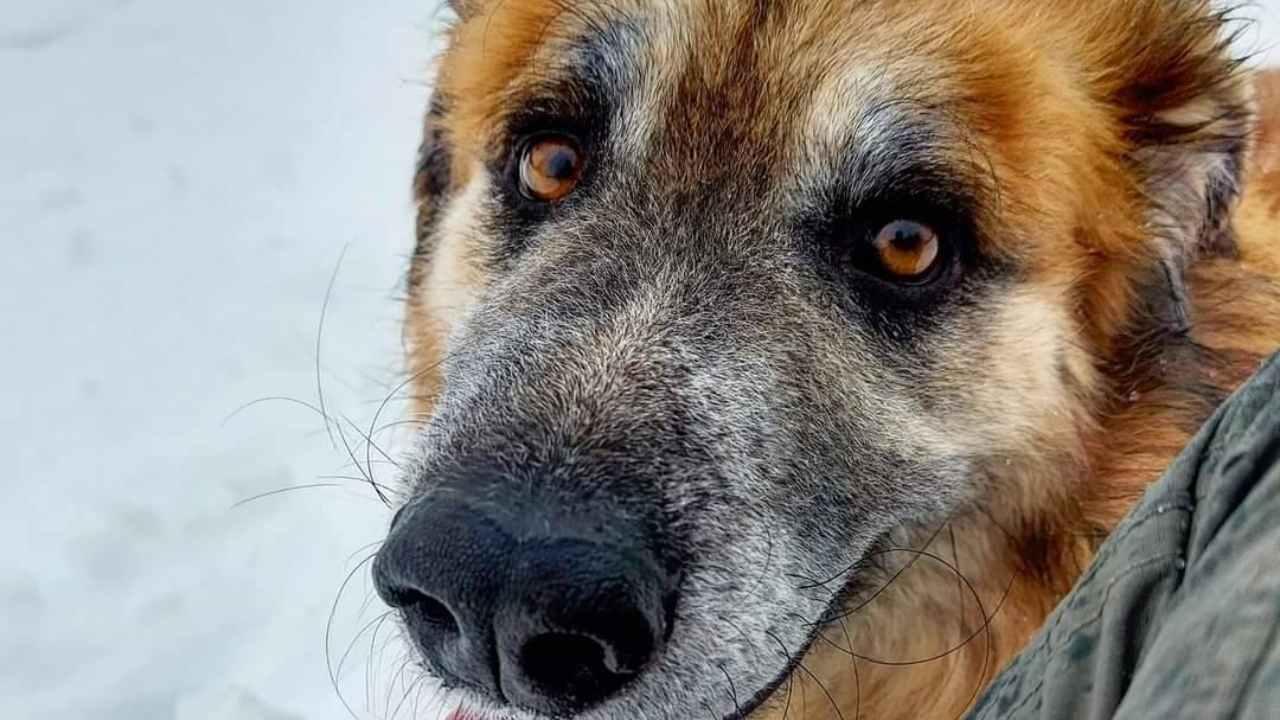 Le chien Dago, récupéré après 4 ans de non-vie: à la recherche d'une famille - VIDEO
