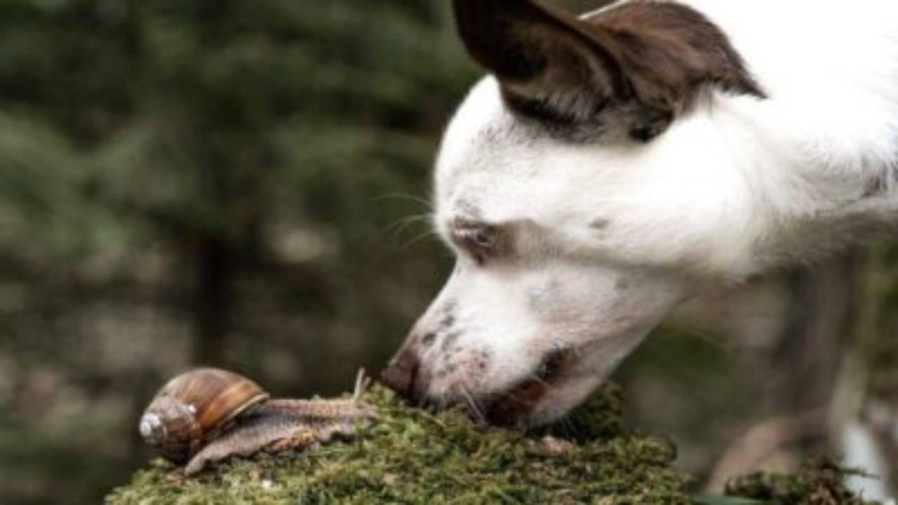 Le chien mange des escargots: quels risques pour sa santé et comment les prévenir